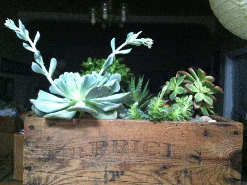 Succulent post 2